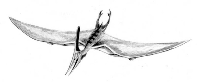 Pteranodon_BW