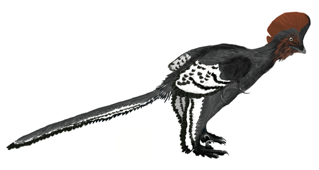 Anchiornis_martyniuk