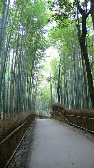 320px-Sagano_Bamboo_Forest_01