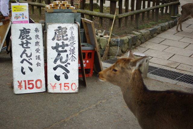 Deer_cookies_at_Nara,_Japan