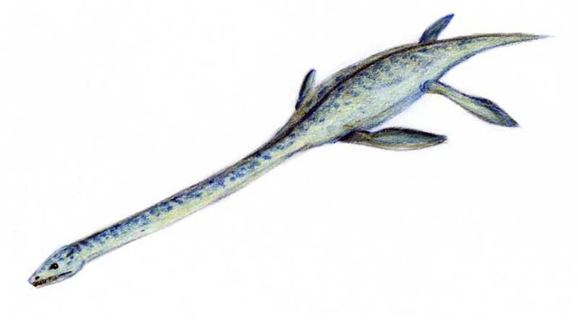 Elasmosaurus2