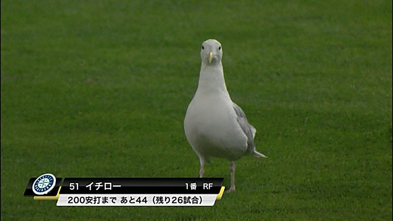 面白ニュースまとめ - cobwebs.jp