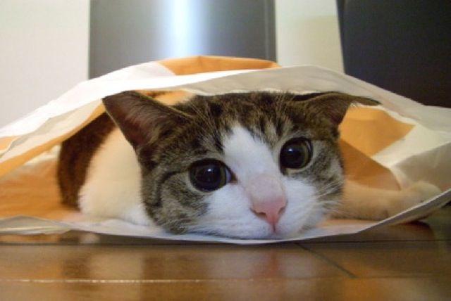 猫を飼うことで後悔やストレスはどれぐらい?どんなことが大変なの? | ボクとワタシの情報基地