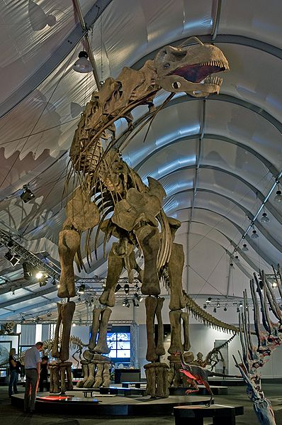 398px-Argentinosaurus_DSC_2943
