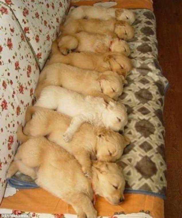 おやすみ前にかわいい犬の里親になった気分で見る!寝る前に見る犬に癒された画像