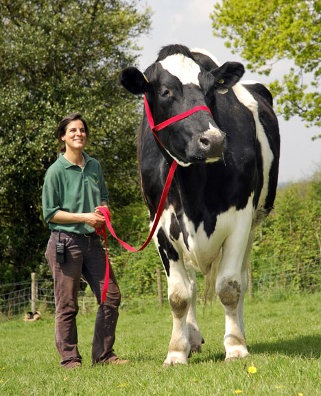 実在した巨大生物・牛
