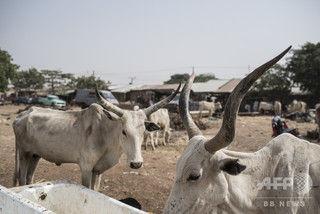 盗賊が村を襲撃、村人7人死亡、盗賊59人死亡 村人強すぎワロタ