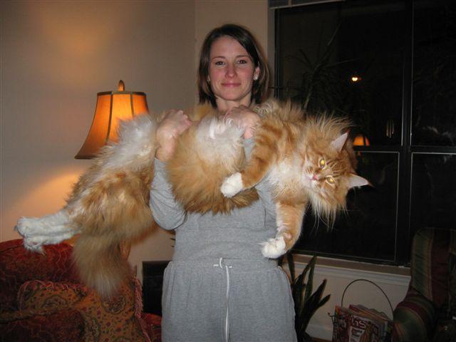 giant-cat