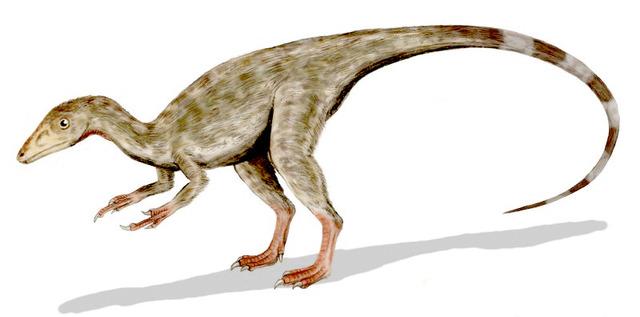 Compsognathus_BW