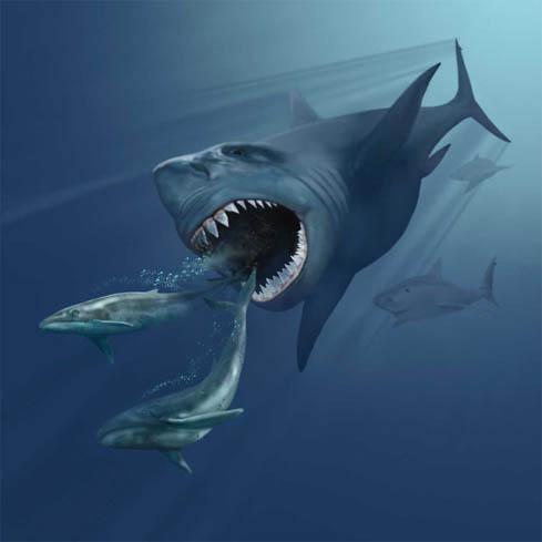 巨大サメ「メガロドン」、絶滅させたのはイルカ族のシャチだった