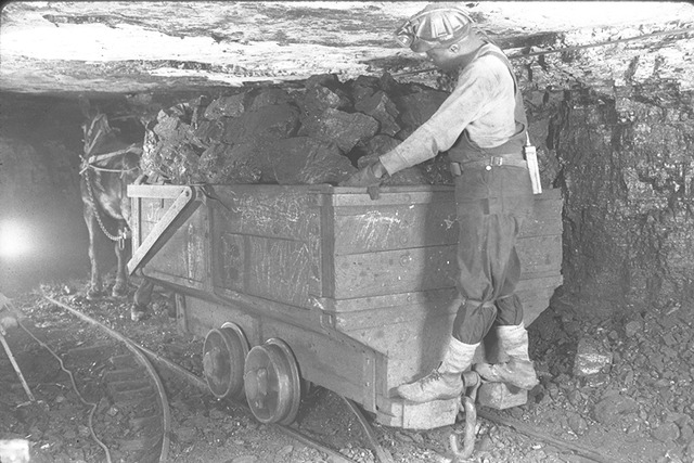 A_mule_pulls_a_load_of_coal