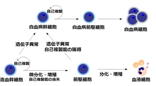 500px-白血病幹細胞の発生(ぱた)