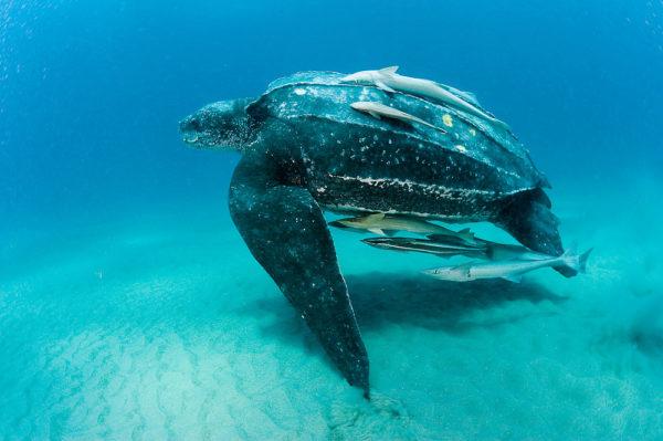 海の生き物最強ランキングBEST15wwwwwwwww