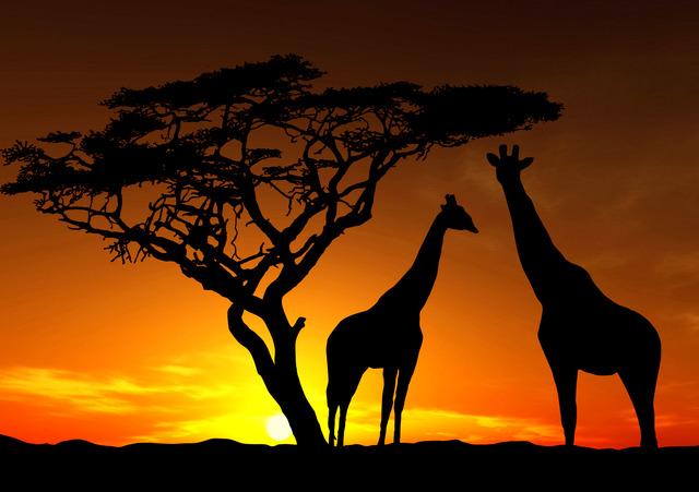 アフリカは人類発祥なのになぜトップじゃないのか