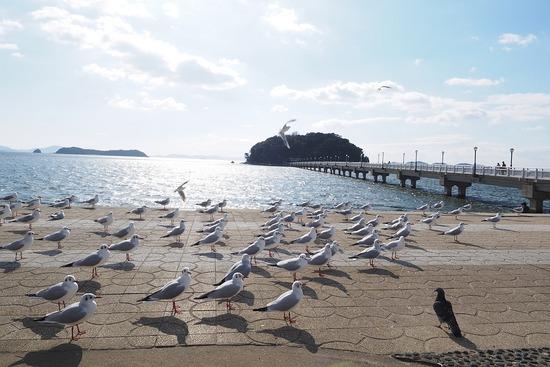 竹島とユリカモメ-s
