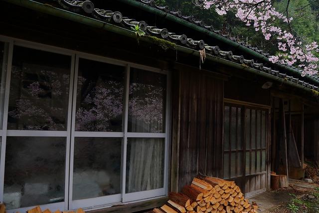 桜風景23-s
