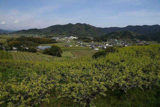 柿畑3-s
