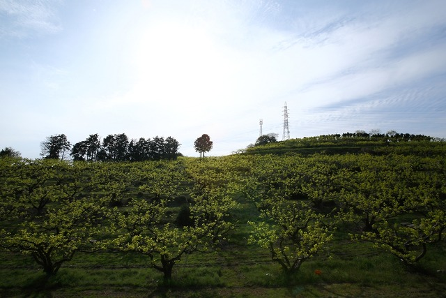 柿畑7-s