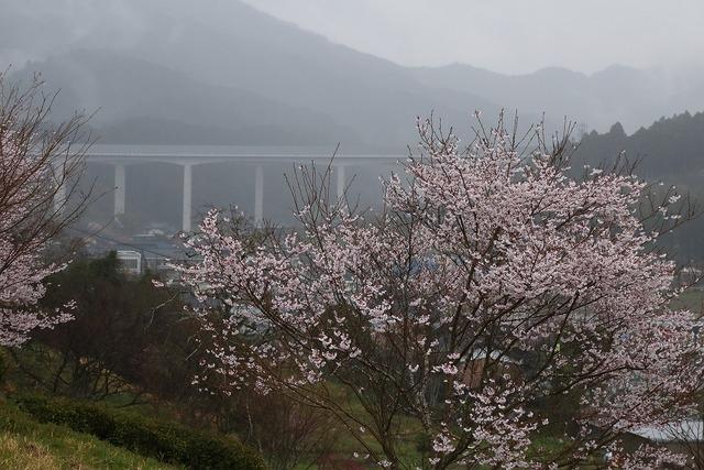 桜風景11-s