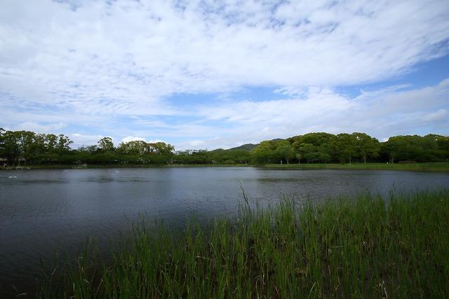 初夏の水神池1-s