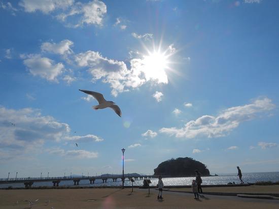竹島とユリカモメ1 (2)-s