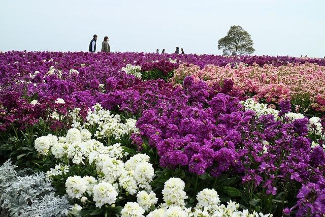 あわじ花さじき-s