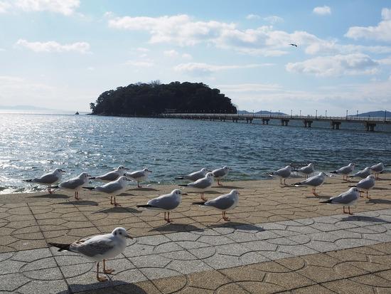 竹島とユリカモメ1-s