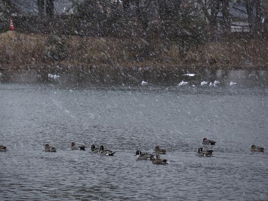 雪舞う水神池3-s