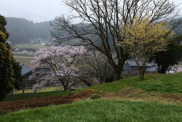 桜風景12-s