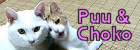 白猫★三毛猫