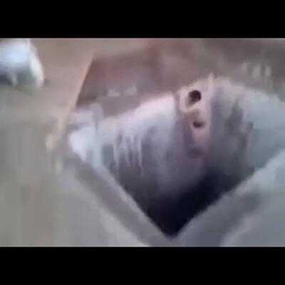 【ドラゴンボール】 18号乳首責め絶頂!! 21号に拘束されて執拗に乳首を責められちゃうwww