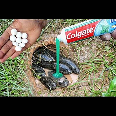 【動画】ナマズが住んでる池に「メントス」と「歯磨き粉」を入れた結果すごい事に・・・