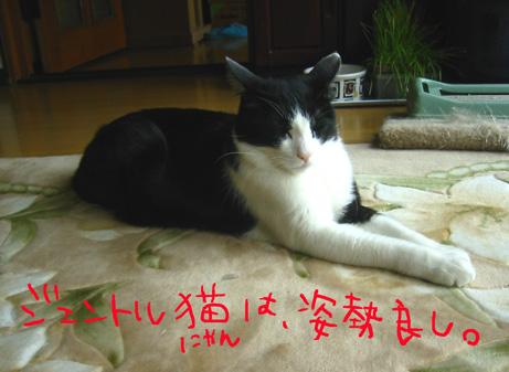 ジェントル猫