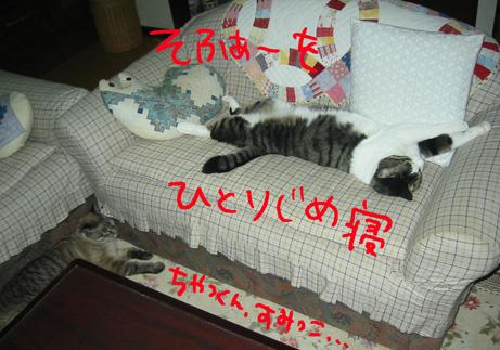 対照的な寝姿