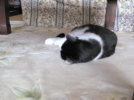 ノンキな猫たち