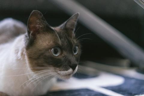 cat9302341_TP_V