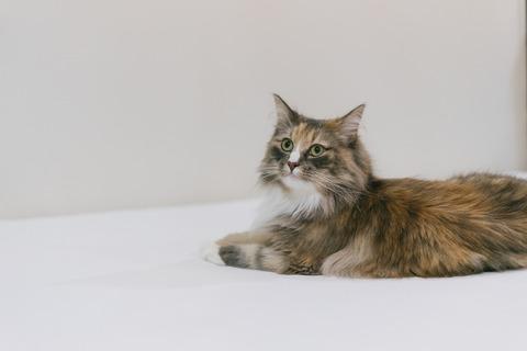 cat9302328_TP_V