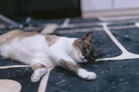cat9302334_TP_V