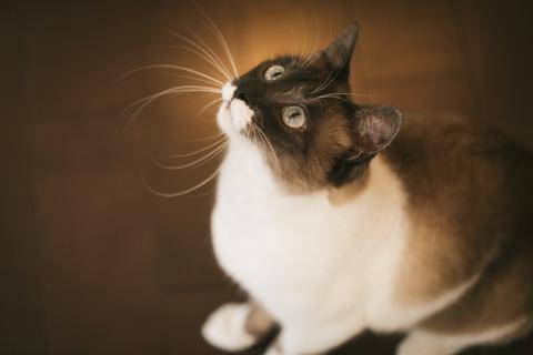 cat9V9A8973_TP_V