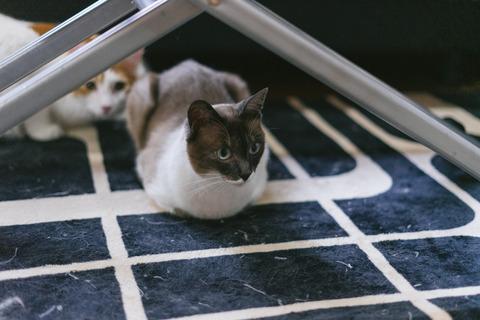 cat9302340_TP_V