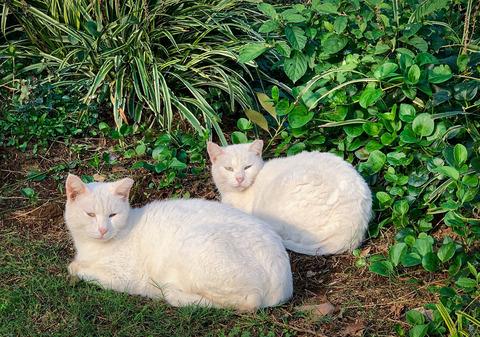 catwhite2_TP_V