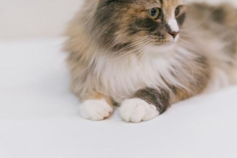 cat9302330_TP_V
