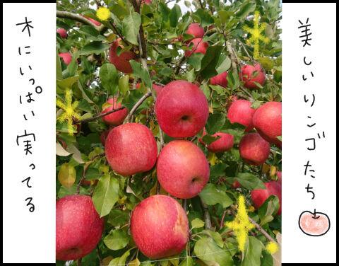リンゴたち