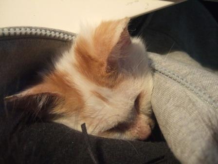 yoru-sleep2