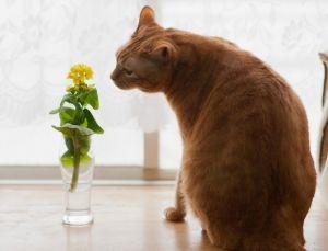 ペット大好き 猫 まとめ