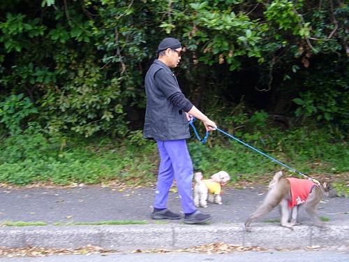 マジック犬と猿の散歩1