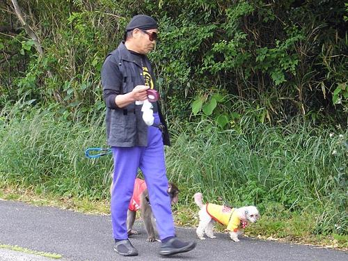 マジック犬と猿の散歩2