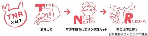 さくらねこTNR