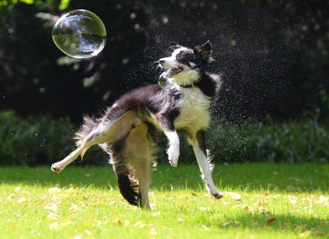 soap-bubbles-672658_1920