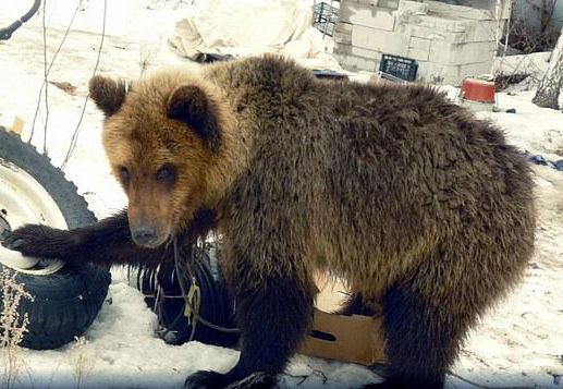 セイルゲイとクマ